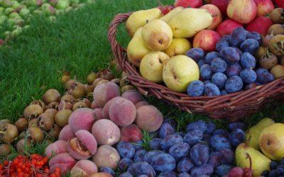La dieta e il 'Bel Paese': i dati dell'Istituto Superiore di Sanità